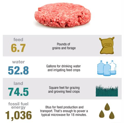 The environmental impact of just one hamburger (Courtesy of Dailytech.com)